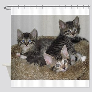 Cute Kittens Shower Curtain