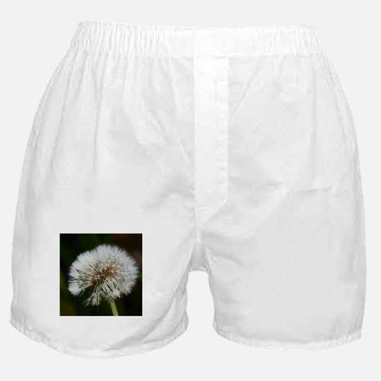 Cute Dandelion seeds blowing in the wind Boxer Shorts