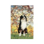 Spring - Tri Aussie 2 Rectangle Magnet (10 pack)