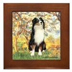 Spring - Tri Aussie 2 Framed Tile