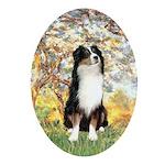 Spring - Tri Aussie 2 Ornament (Oval)