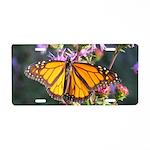 Monarch Butterfly on Purple Milkweed Aluminum Lice