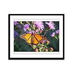 Monarch Butterfly on Purple Milkweed Framed Panel