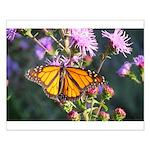 Monarch Butterfly on Purple Milkweed Posters