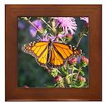 Monarch Butterfly on Purple Milkweed Framed Tile