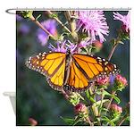 Monarch Butterfly on Purple Milkweed Shower Curtai