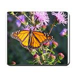 Monarch Butterfly on Purple Milkweed Mousepad
