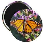 Monarch Butterfly on Purple Milkweed Magnets