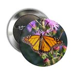 Monarch Butterfly on Purple Milkweed 2.25