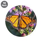 Monarch Butterfly on Purple Milkweed 3.5