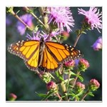 Monarch Butterfly on Purple Milkweed Square Car Ma