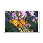 Monarch Butterfly on Purple Milkweed Car Magnet 20