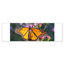 Monarch Butterfly on Purple Milkweed Bumper Sticke