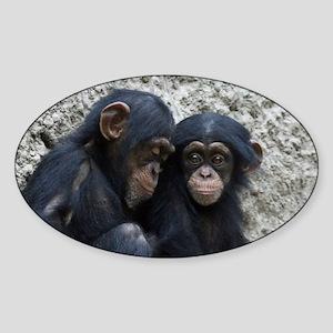 Chimpanzee002 Sticker