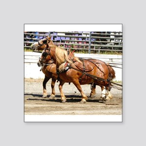 "Belgian Horse Square Sticker 3"" x 3"""