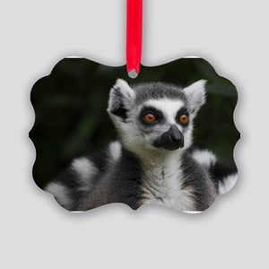 Ring tailed lemur Picture Ornament