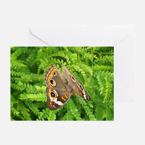 ButterflyFern Greeting Cards (Pk of 10)