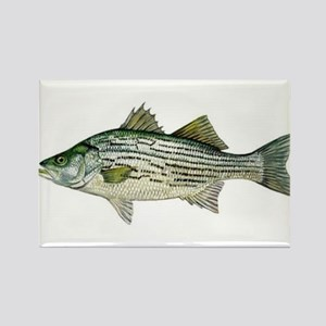 Striped Bass Magnets