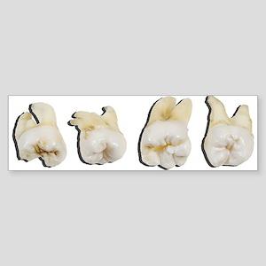 Wisdom Teeth Bumper Sticker