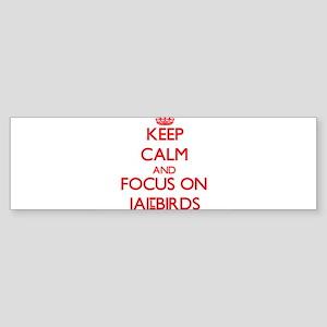Keep Calm and focus on Jailbirds Bumper Sticker