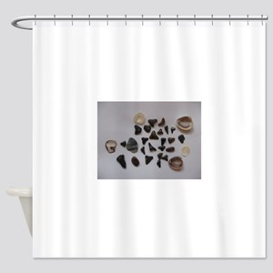 Fossilized Sharks Teeth And Shells Shower Curtain