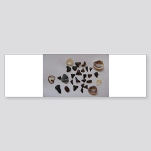 Fossilized Sharks Teeth And Shells Bumper Sticker