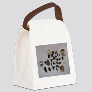 Fossilized Sharks Teeth And Shells Canvas Lunch Ba