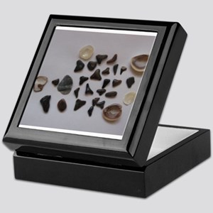Fossilized Sharks Teeth And Shells Keepsake Box