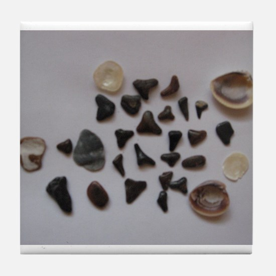 Fossilized Sharks Teeth And Shells Tile Coaster