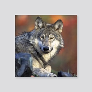 "Wolf Photo Square Sticker 3"" x 3"""