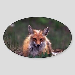 Red Fox Oval Sticker