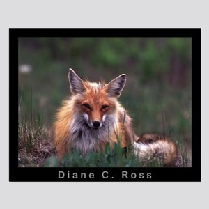 Red Fox Small Poster