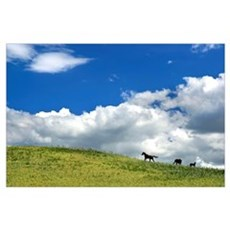 Horses Galloping On Hill Poster