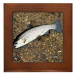 Taneycomo Rainbow Trout PS Framed Tile