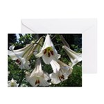 White Lilies Greeting Cards (Pk of 10)
