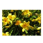 Yellow Lilies Postcards (Package of 8)