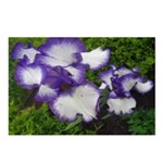 Blue Iris Postcards (Package of 8)