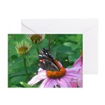 Butterfly Echinacea Greeting Cards (Pk of 20)