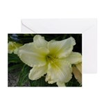 White Fancy Lily Greeting Cards (Pk of 20)