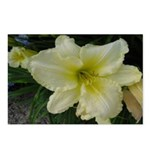 White Fancy Lily Postcards (Package of 8)