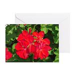 Red Geraniums Greeting Card