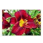Burgundy Wine Lilies Postcards (Package of 8)