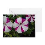 Peppermint Stripe Petunias Greeting Card