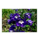 Blue Delphinium Postcards (Package of 8)