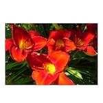 Orange Lilies Postcards (Package of 8)