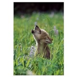 Baby wolf Wrapped Canvas Art