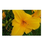 Yellow Lily Postcards (Package of 8)