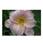 Fancy Pink Lily Postcards (Package of 8)