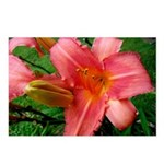 Flamingo Pink Lily Postcards (Package of 8)