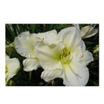 Snowy White Lilies Postcards (Package of 8)